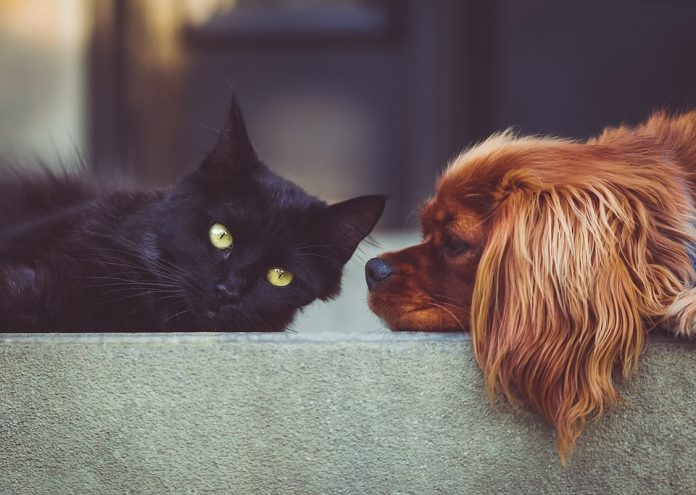 Which Animals Make The Best Pets?