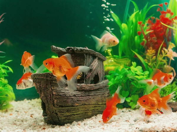 Diy How To Create A Natural Aquarium From Scratch